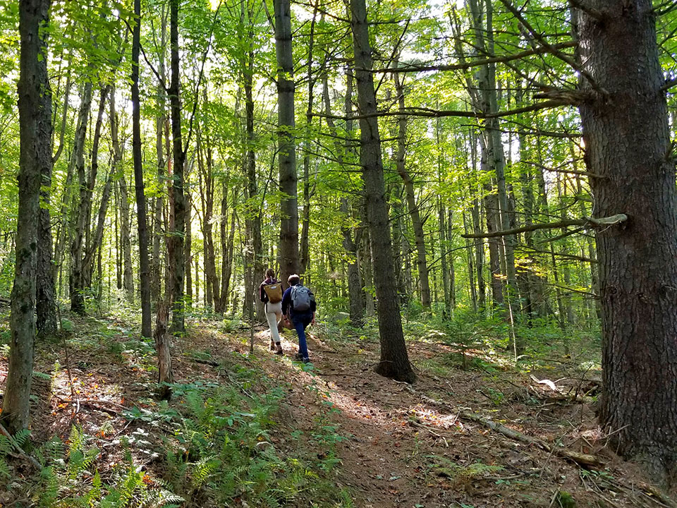 Help Create Huntington Community Forest