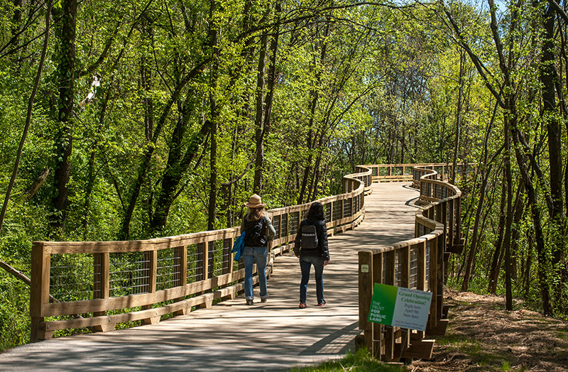 Photo of two people walking on a bridge trail through the woods