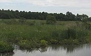 Broad Dyke Wetlands, Delaware