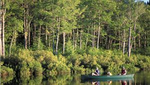 Trout Pond in the Freedom Community Forest