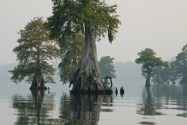 Great Dismal Swamp,North Carolina