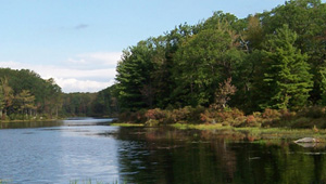 Delaware State Forest, PA