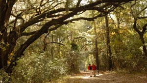 Altahma Town Preserve, South Carolina