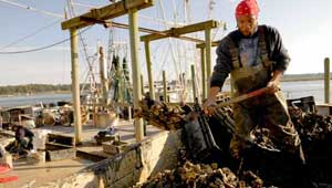Bluffton Oyster Company, South Carolina