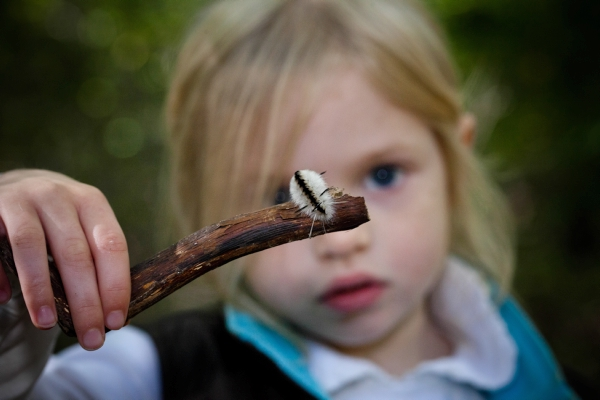 A child observes a caterpillar at The Preserve in Old Saybrook, CT.