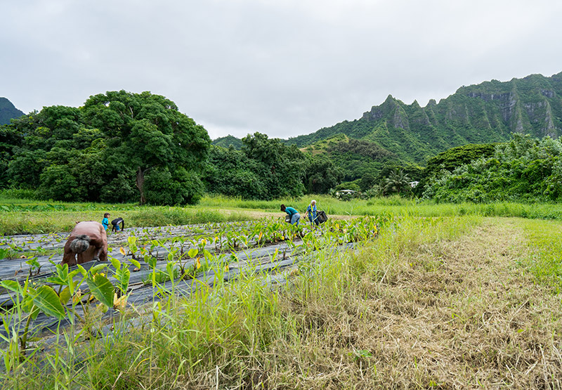 Photo of a farm and workers in Hawaii