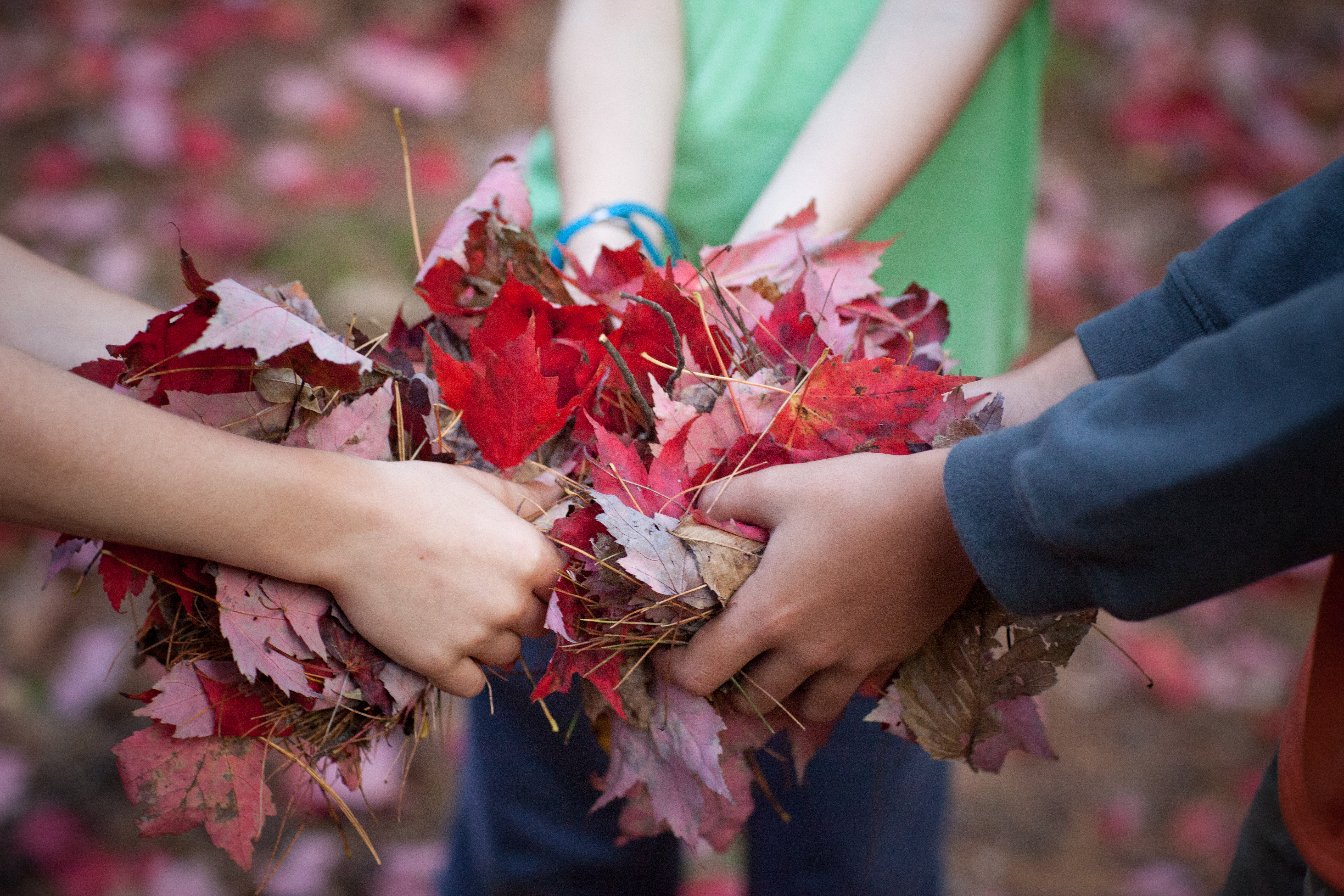 Three pairs of children's hands hold a pile of red autumn leaves at Hudson Farm in Hanover, NH.