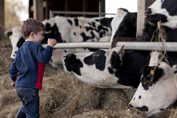 Seventh-generation dairy farmer Eli Robie hanging with his Holsteins
