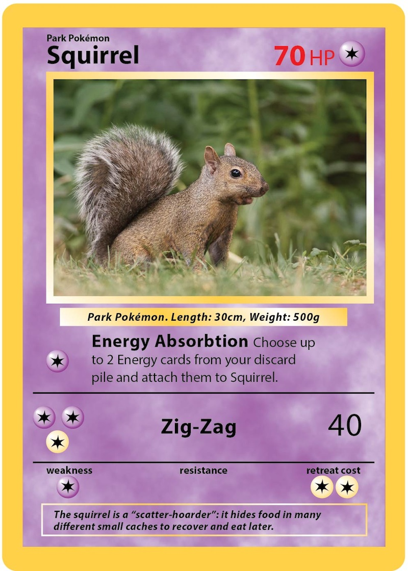 A mock Pokemon card of a squirrel