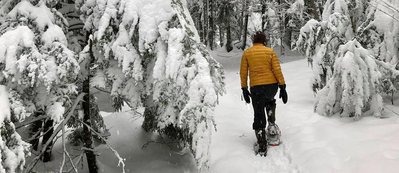 A person snowshoes through fresh powder in a forest