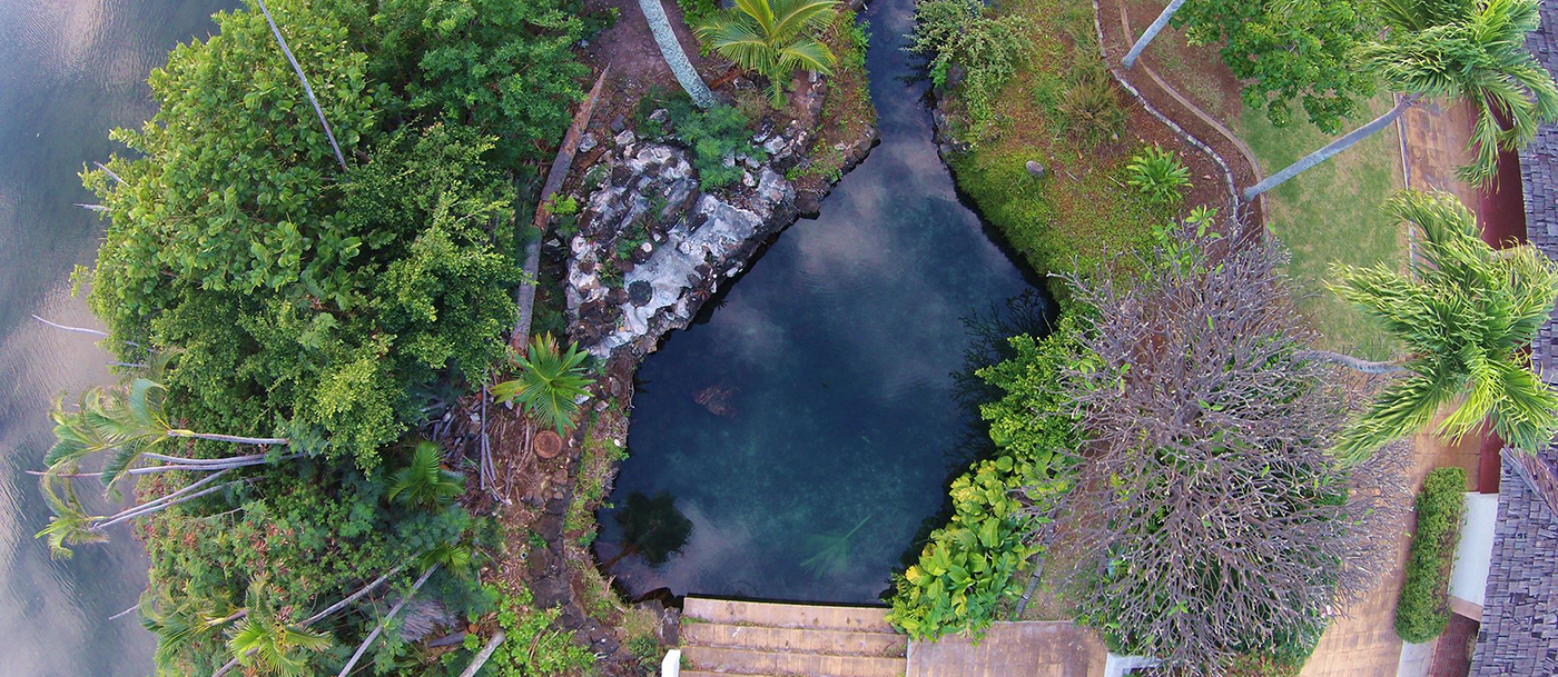 Aerial photo of a blue pool surrounded by palm trees