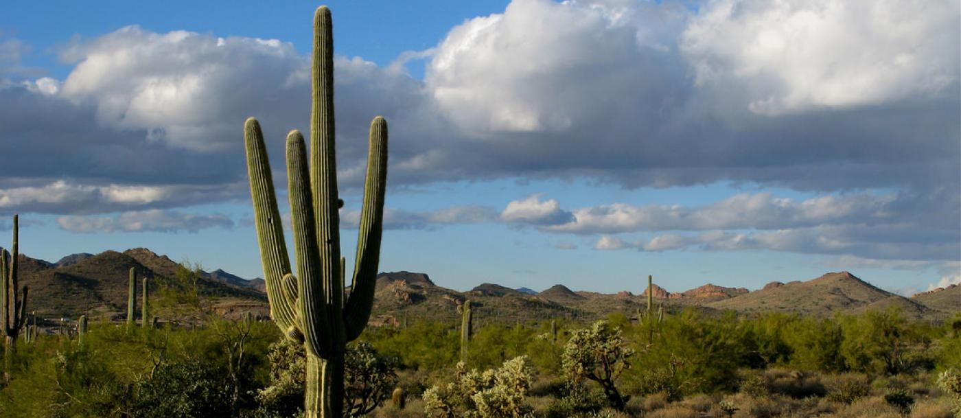 Sharpen your saguaro smarts with 10 cactus facts | The Trust for ...