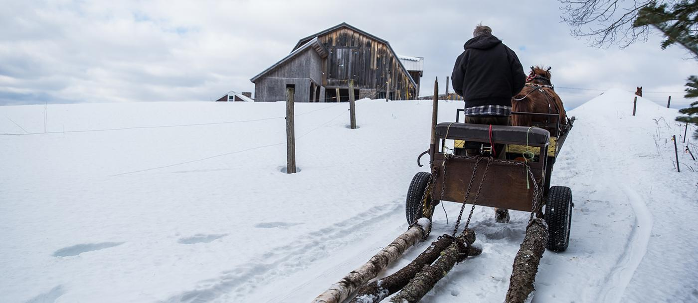 A man drives a horse-drawn sled in the snow pulling logs
