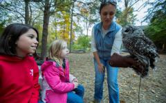 An educator holds a barred owl at Denison Pequotsepos Nature Center at Coogan Farm.  An educator holds a barred owl at Denison Pequotsepos Nature Center at Coogan Farm.