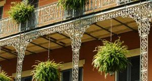 Ferns in New Orleans' French Quarter