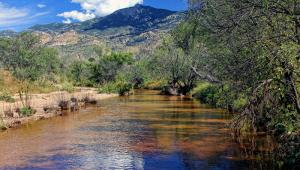 Rincon Creek in Saguaro National Park