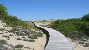 Plum Island, Parker River National Wildlife Refuge, MA