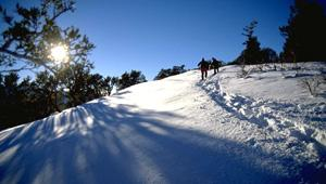 The 350-acre Summit Park property encompasses the forested hillsides surrounding the small town of Summit Park.