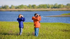 Birding at Long Beach, Connecticut