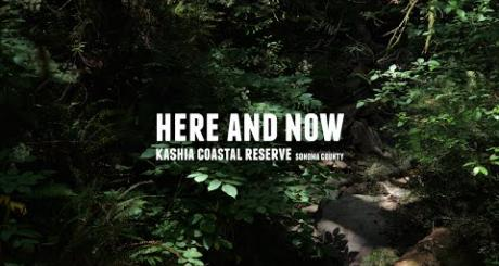 Here and Now -  Kashia Coastal Reserve