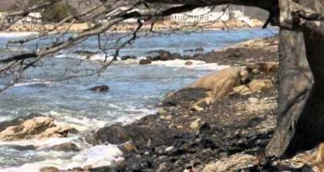 Timber Point - a conservation opportunity in Biddeford, ME