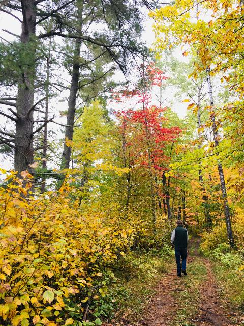 Crow Wing Forest North