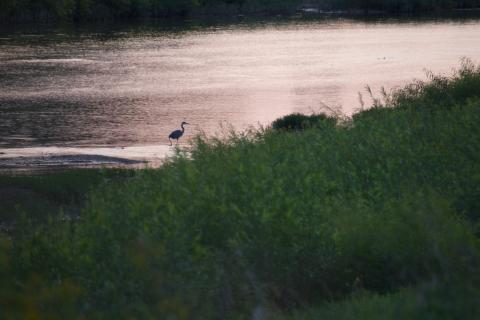 A heron on a dusky river