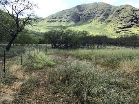 Photo of MA'O Organic Farm Palikea Expansion