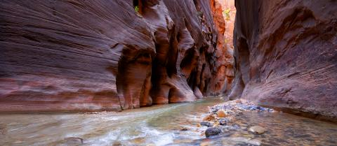 A green river runs through a deep red canyon in Zion National Park