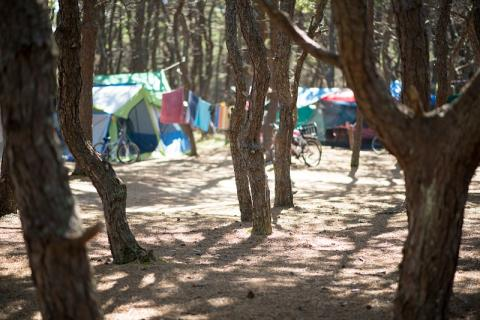 Tents, tarps, and bikes in a forested campsite