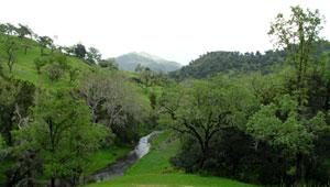 Atascadero Creek, CA