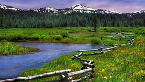 Springtime in Perrazo Meadows with snowy Sierra peaks in the distance.