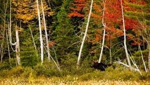 Northern Forest Program, Maine. Photo: Jerry and Marcy Monkman