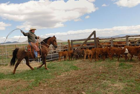 Working farms and ranches