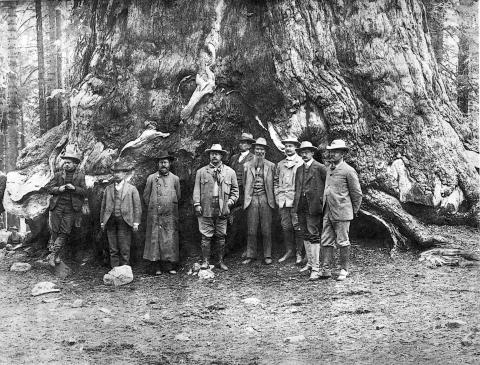 President Roosevelt stands at the center of a group of men in front a giant Sequoia tree