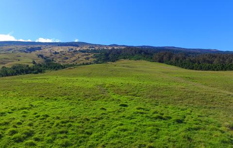 Photo of Haleakala View in Kamehamenui Forest