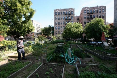 Tremont Community Garden, New York City