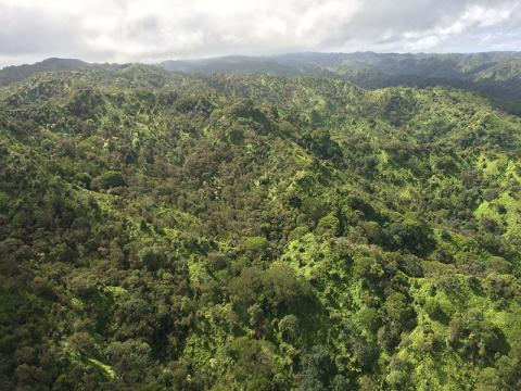 Photo of Waimea Native Forest