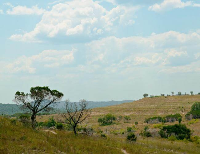 A Texas savanna under blue skies with puffy white clouds and a tree in the foreground