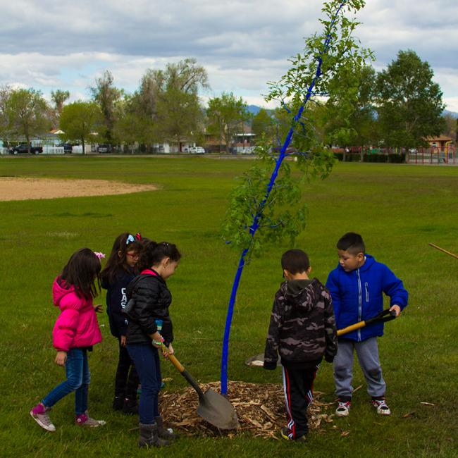 Children plant a blue tree