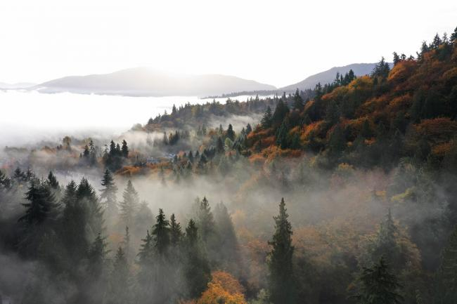 Aerial photo of an autumnal northwest mountainside with fog