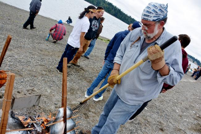 A man cooks salmon on sticks over a fire