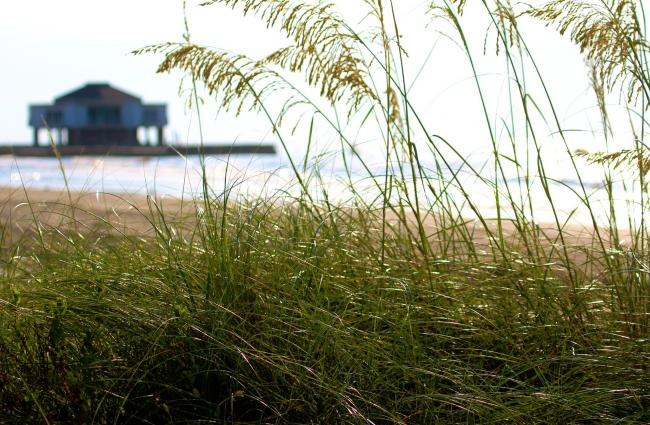 Dune grasses in front, home on stilts behind