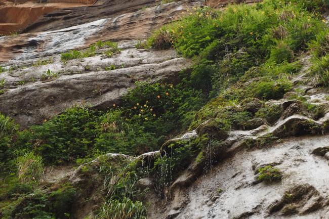Plants grow out of a canyon wall