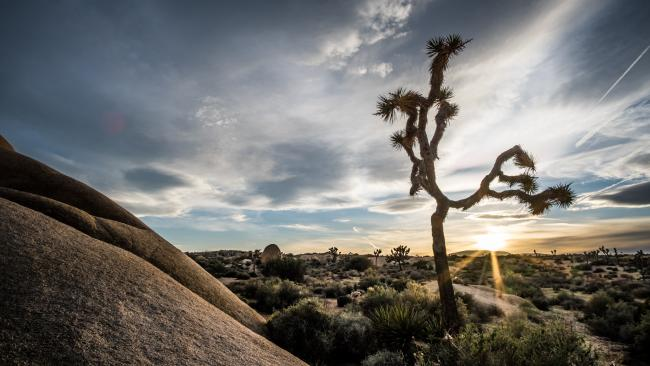 The sun sets behind a Joshua tree desert