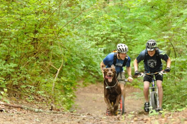 Two men mountain bike with their dog to Stringer's Ridge.  Two men mountain bike with their dog to Stringer's Ridge.