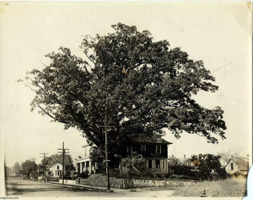 The Johnson Oak