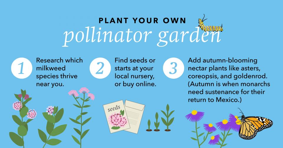 Information about planting a garden for pollinators