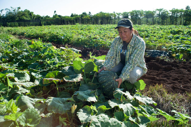 Farming on Oahu's North Shore
