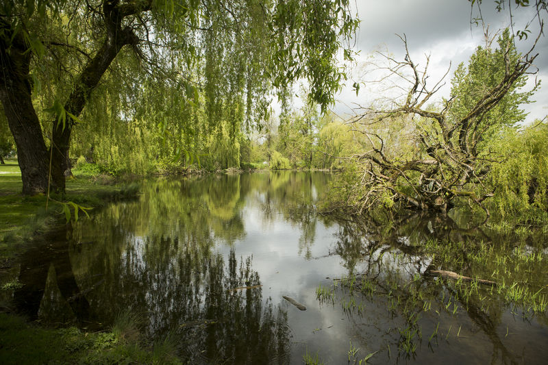Trees are reflected in a pond at Colwood Park in Portland, Oregon